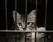 10 ways to prevent animal abuse