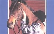 Riding and Horse Safety