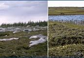 Description of Tundra