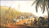 How did the plantation system work in the New World (What cash crops were produced?