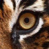 Eye Of The Tiger by: Survivor