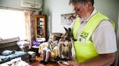 Man helping kangaroo joey.