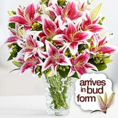 Greatest love Lilies