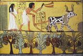 Ancient Mesopotamia Farmers