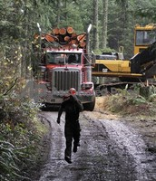 A typical logger working hard