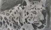 Animal Sculptures & Drawings