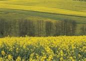 Financial Impact - Biomass Energy
