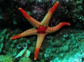 WHAT IT TAKES TO BE A ECHINODERM