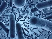 ¿que son las bacterias?