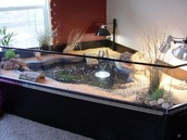 No better turtle tanks than ours!