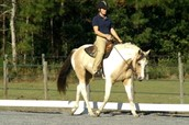 Dressage Divisions: Traditional, Western, Gaited
