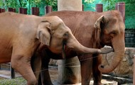 Cute Elephants at the Dusit Zoo