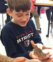 Oh, No!  A Gecko!