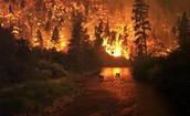 Many animals die due to wildfires each year.