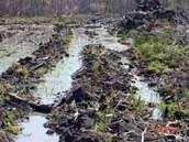 Destruction in wetlands