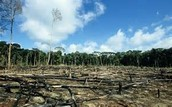 Broken Rainforest
