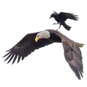The Symbolism of Birds: