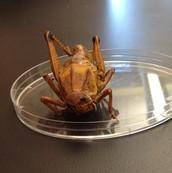 Example Grasshopper