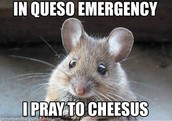 Its so cute how it ses in queso emergency I pray to cheeseus