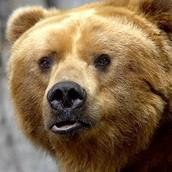 Donna The Bear