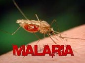 How to get Malaria