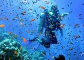 ✓ Scuba Diving in Beau Vallon Bay