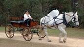 Renaissance Transportation
