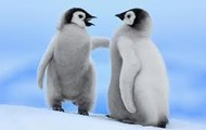 Penguins are adorable!