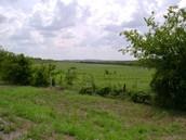 Oakwoods Prairies