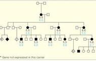 Pedigree Chart of Cri Du Chat Syndrome