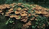 Fungi Facts