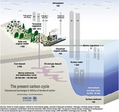 grid carbon cycle