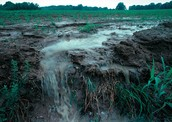 Agricultral Runoff