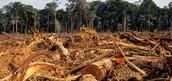 Harmful Activities towards the Rainforest