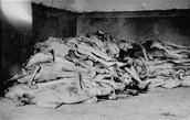 corpses