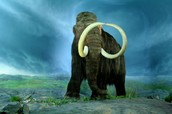 Mammoths and their ecosystem