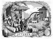 Colonial Pumpkin farm