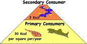 what are primary and secondary comsumers