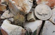 Cactus Size