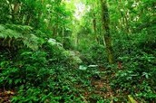 The Rainforest is very green,