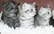 Food for Kitties!