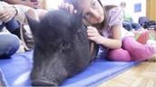 maestros animales