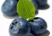 BLUEBERRIES / ARÁNDANOS