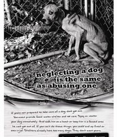 Animal shelter ad
