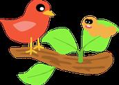 Linguafolio Early Birds