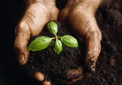Plant a seed to nurture and grow forever!