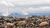 Contaminación  por las fabricas