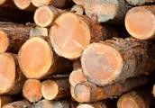 (VANI) resources... lumber