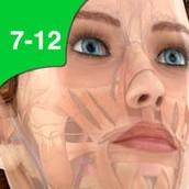 3. Pocket Anatomy Grades 7-12