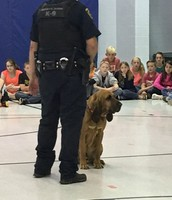 about K-9s!